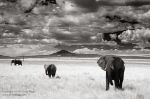 Three Elephants