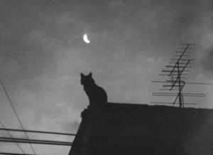 cat in night