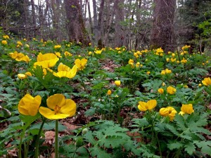 Photo-6-Wood-Poppies