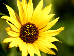 plants-beautiful-flowers-pictures-wallpapers