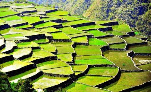 rizière-de-banaue