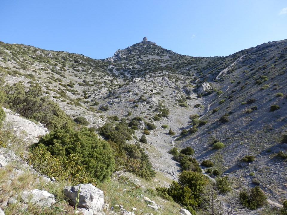 Tour de Tautavel et garrigue à genévrier de Phénicie / Junipérus phoenicea.