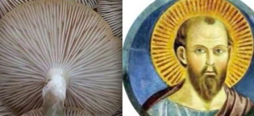 mushroom xmas4
