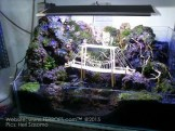 Aquascape4.jpg
