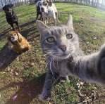 Kucing-selfie-6