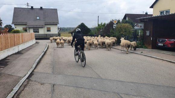 4-cycling-shepherd
