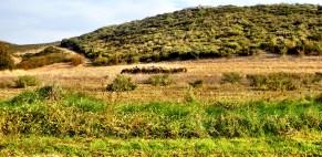 Τα προβατακια στο βουνο