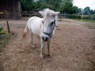 Natan, der Weise, ist mit seinen über 30 Jahren das älteste Tier am Hof