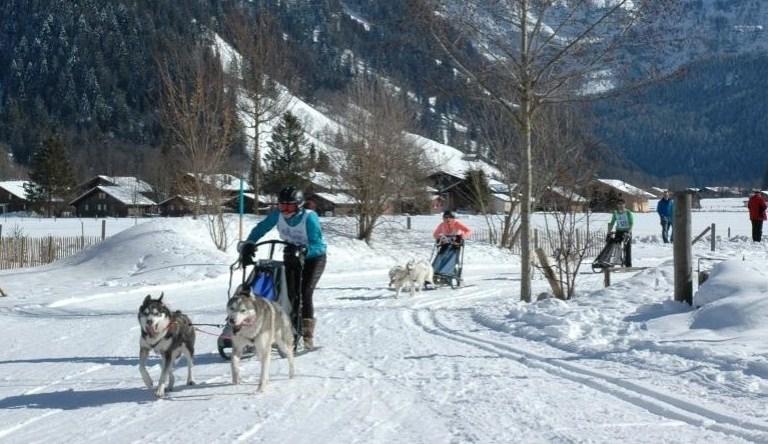 Maak een ritje met een hondenslee