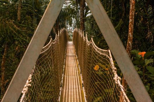 Lekki Conservation Centre Canopy Walk