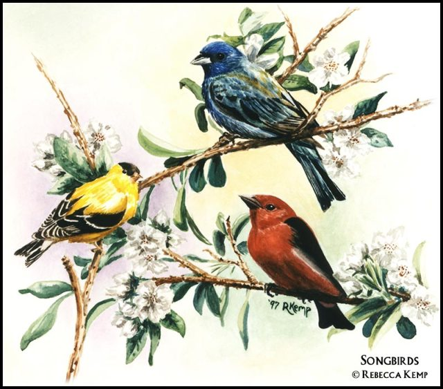 Songbirds - goldfinch, indigo bunting, scarlet tanager