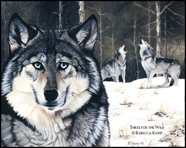 Three for the Wild -  gray wolves