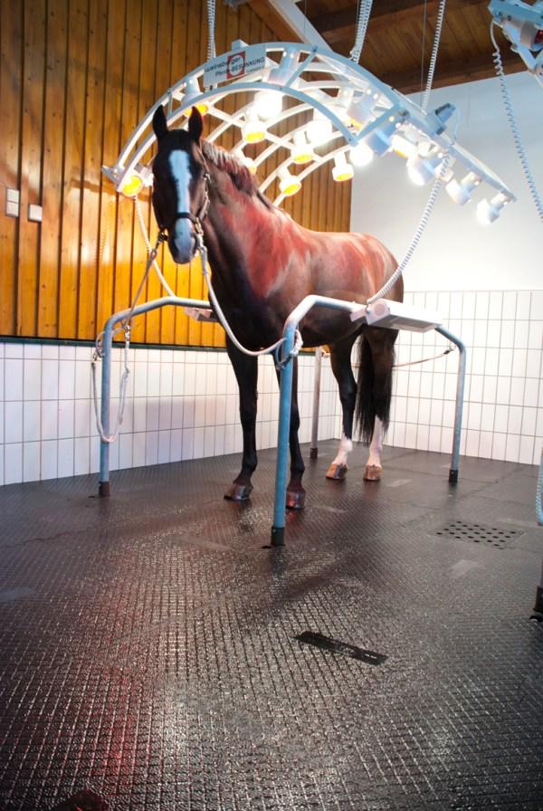 At bakım ve solaryum zeminleri ve kauçuk kaplama