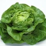Salade Sucrine