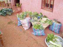 Paniers de légumes variés livrés de manière hebdomadaire à un point fixe.