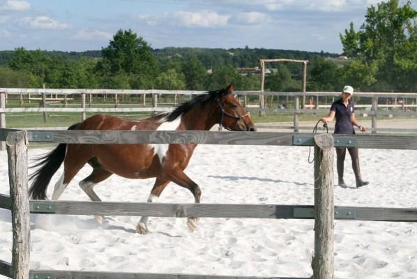 équitation 33