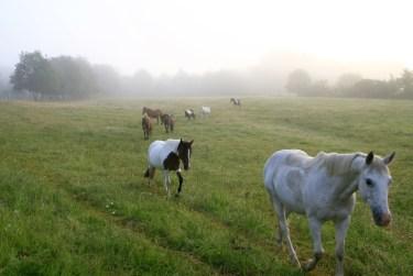 Les chevaux de la Ferme de Peyrot