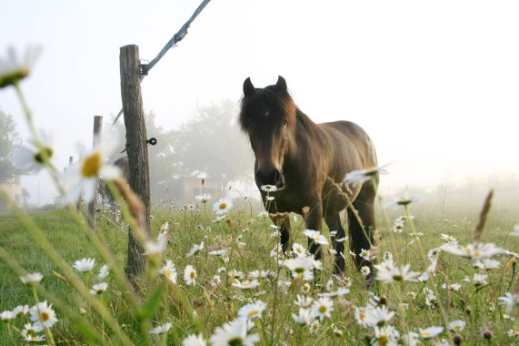 promenade à cheval en gironde