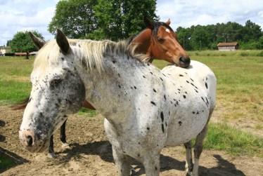 équitation en gironde