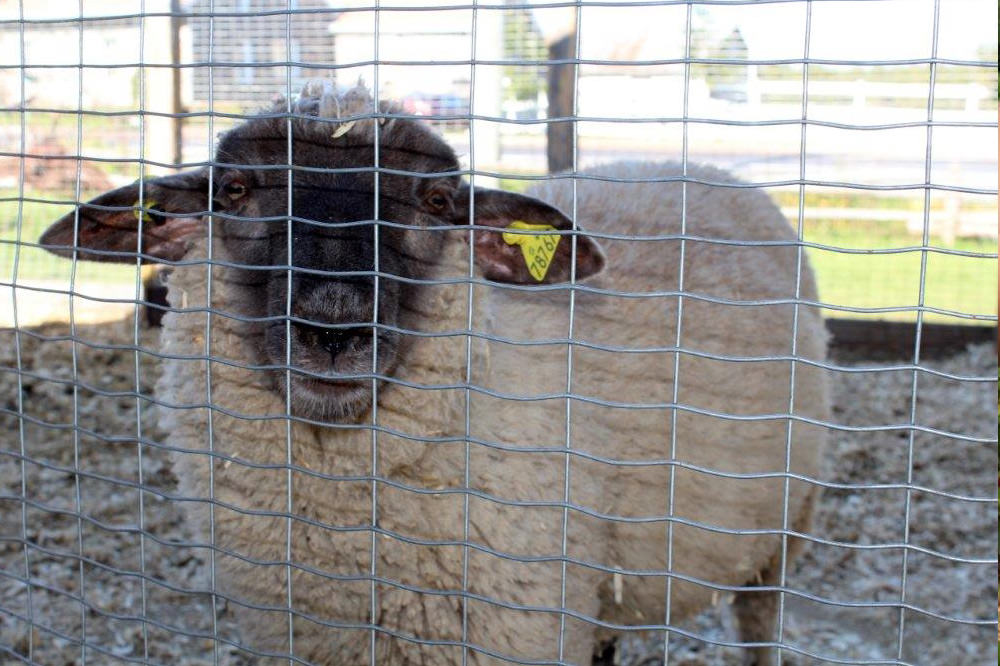 La ferme à Maturin - La Ferme Genest