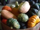 Courges (6)