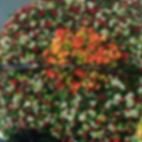 Muere hijo del Azul; Caro Quintero y los Arzate envían coronas de flores
