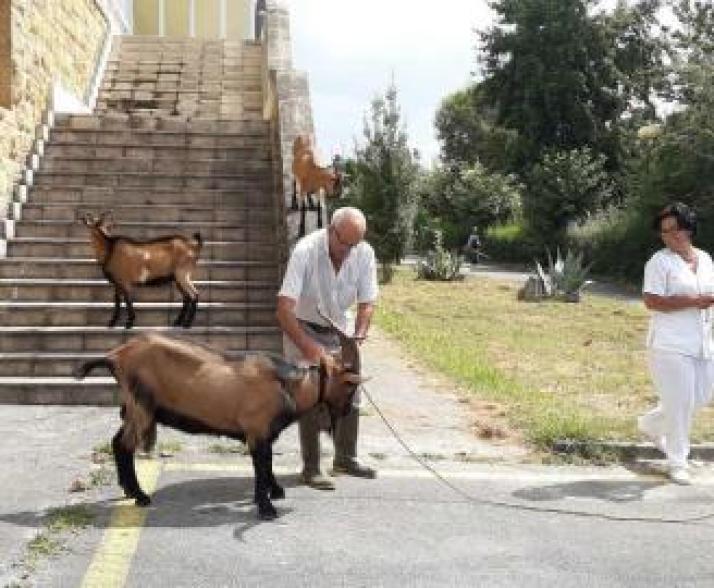 cabras-toman