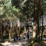 Plötzlich am Meer Festival in Polen: Spaziergang durch den Wald