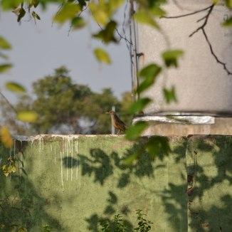 Wir haben Kolibris gesehen, in Buenos Aires! Das ist aber keiner ;)