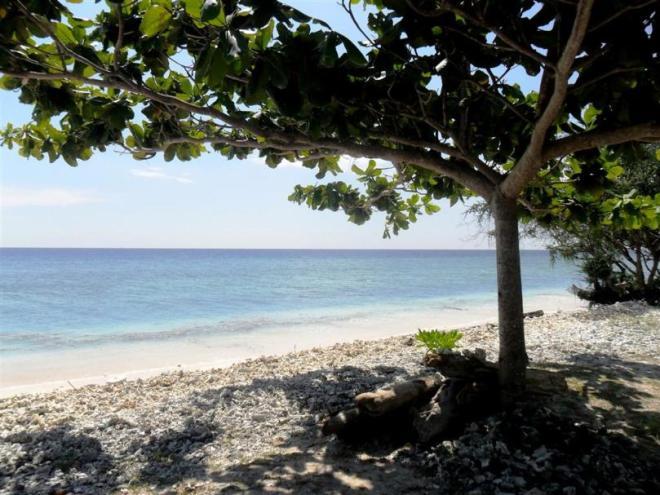 Natur pur auf der Insel Gili Trawangan (Lombok) in der Nähe von Bali
