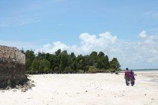 Spaziergang durch die Mangroven von Sansibar - Michamvi Kae - Backpacker-Tipp