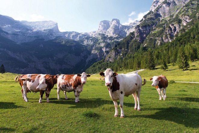 Urlaub in den Bergen und in der Natur: Österreich, Salzburger Land