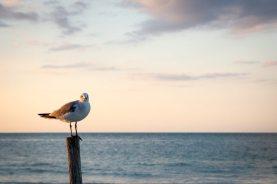 Isla Holbox Mexiko: Ein Vogelparadies