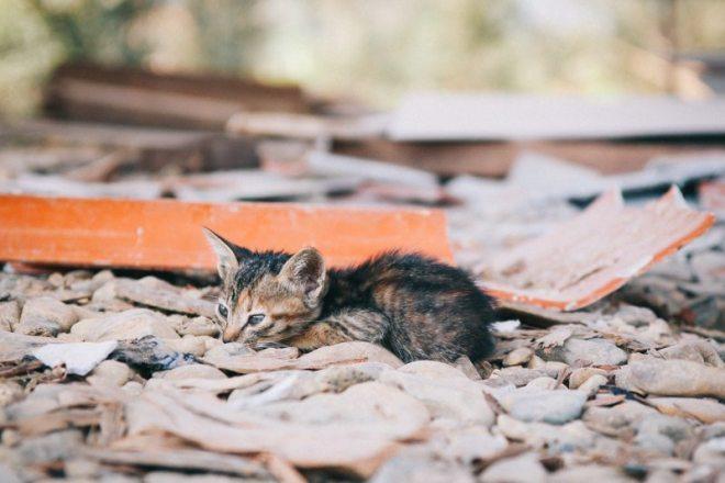 Babykatzen in Vang Vieng Laos