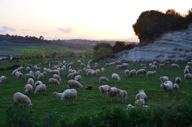 Mit dem Mietwagen durch Mallorca: ich liebte die Idylle im Landesinneren