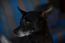 Unser Dauergast Pixie
