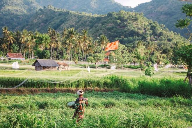 Reisfelder bei Amed - Tipp für die Bali Backpacking Route