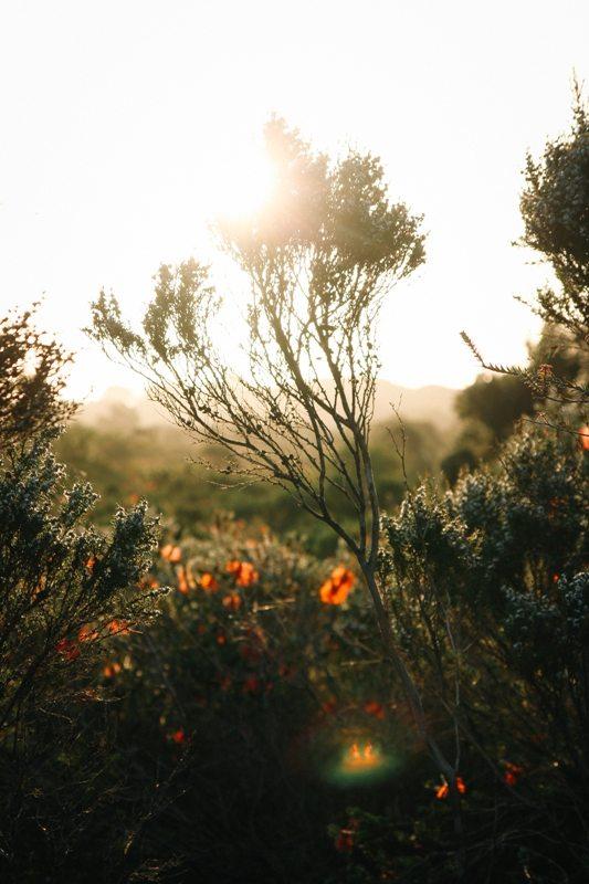 Cozy Corner bei Albany - wunderschöne Wiesen im Süden Westaustraliens
