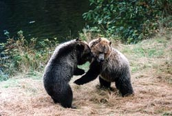 Rocky Mountain Grizzly Centre