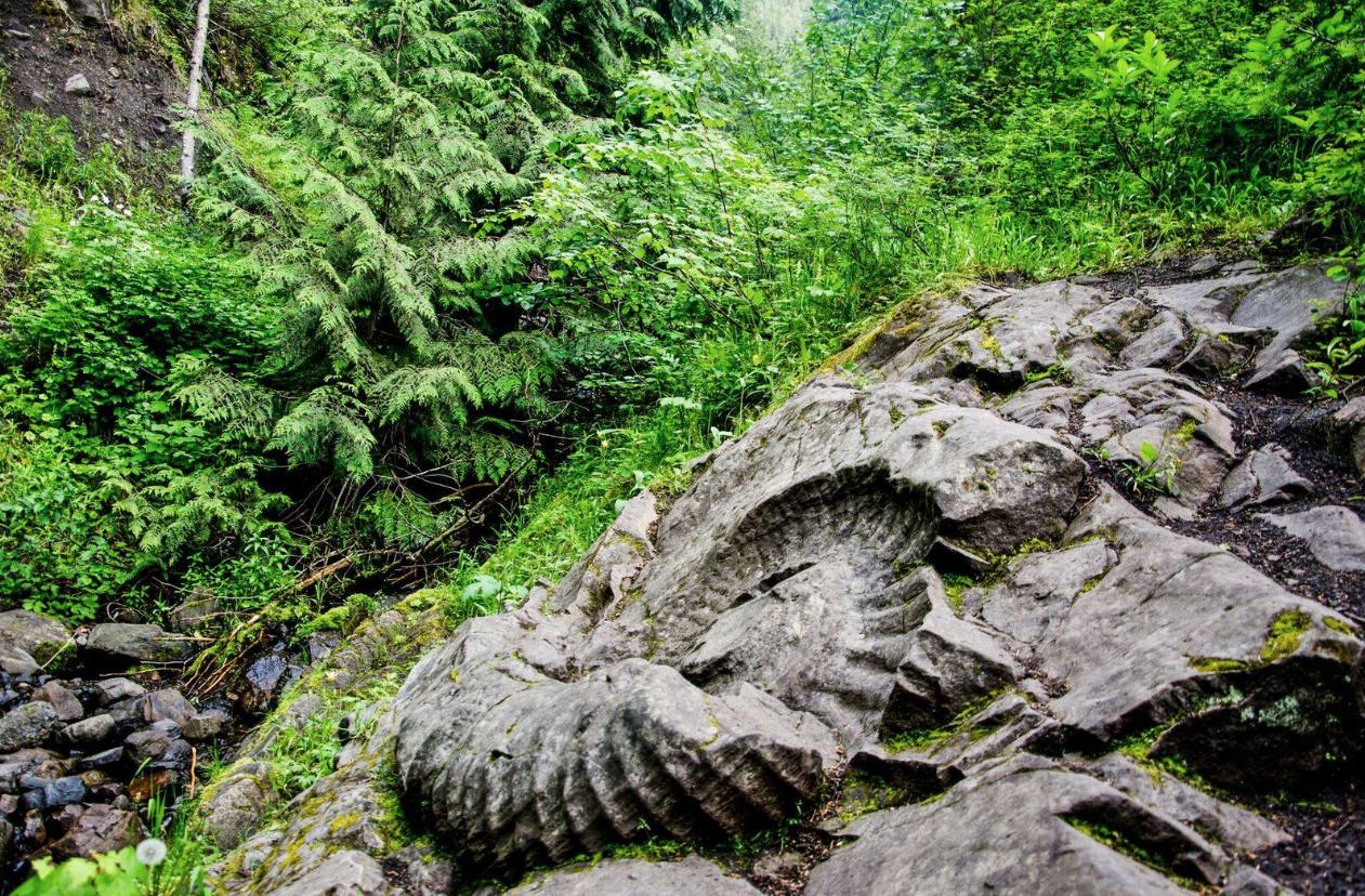 Ancient Ammonite Adventure