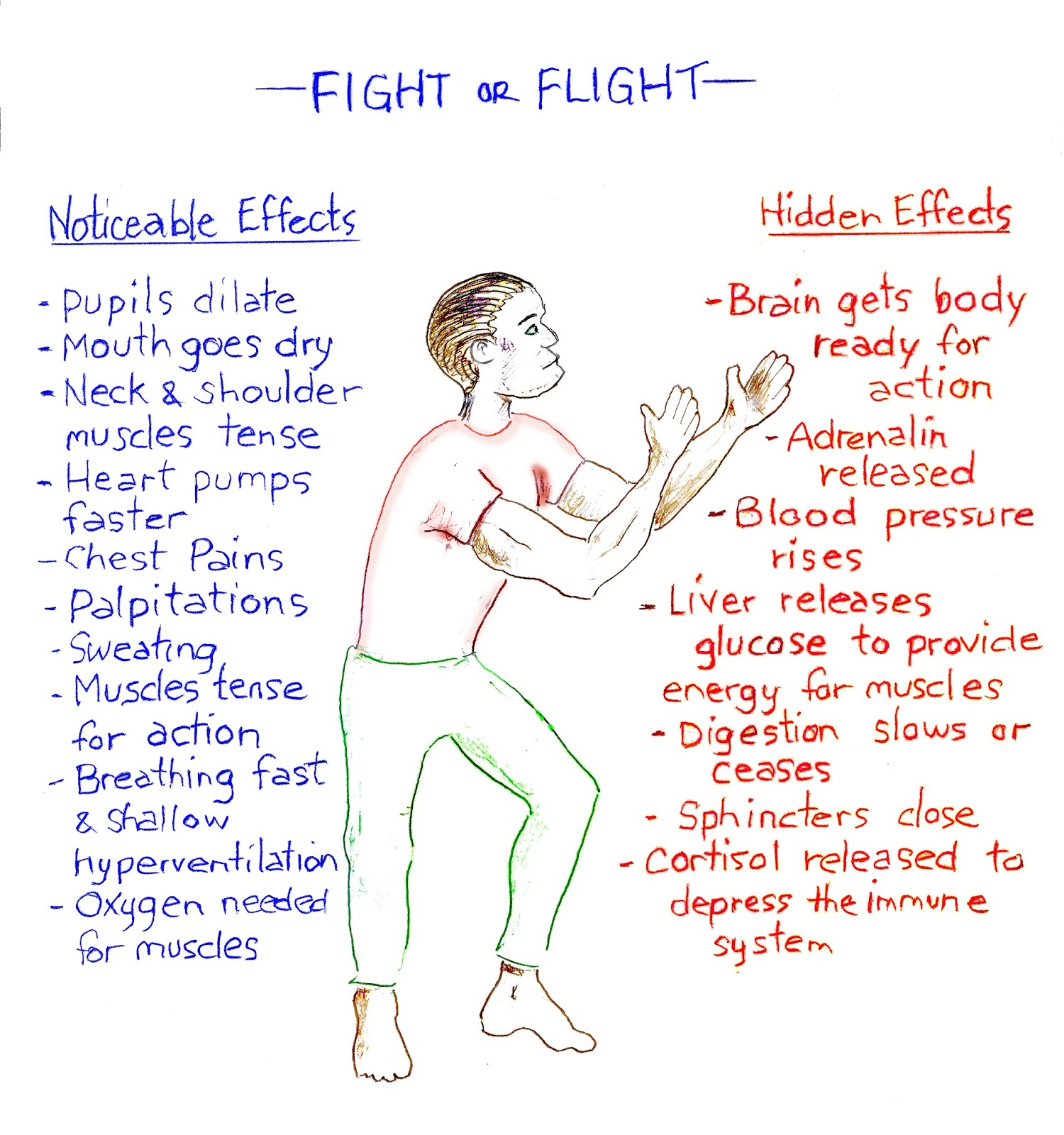 Anxiety Ridden Fight Or Flight Day 15 Blog Challenge