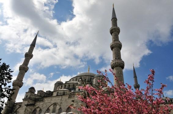 Blaue Moschee mit Fliederbusch