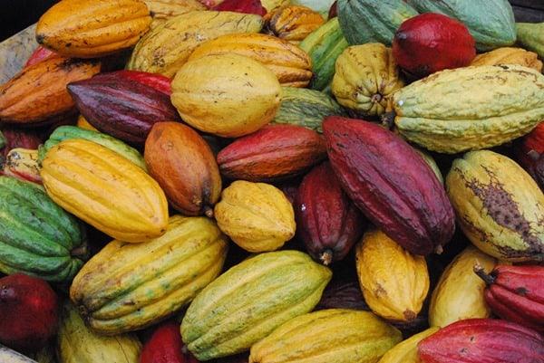 05_Kakaofrucht-Kona-Big-Island-Hawaii