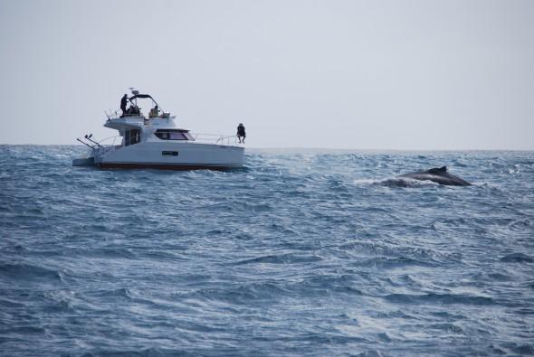 00 Whale watching Boa Vista Kapverden 1