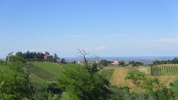 09_Weinberge-Emilia-Romagna-Italien