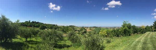 10_Weinberge-Emilia-Romagna-Italien