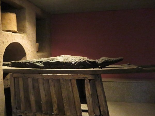 Krokodilmuseum Kom Ombo Krokodilmumie Nil Ägypten