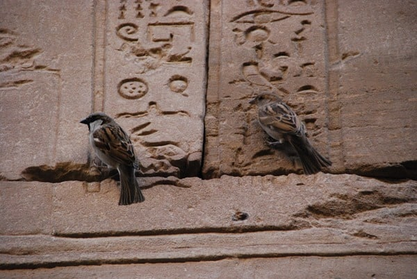 Horus Tempel von Edfu Spatzen am Relief Ägypten Nil Nilkreuzfahrt