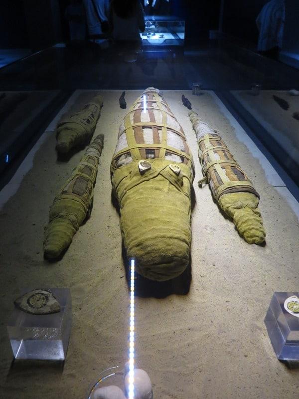 Krokodilmuseum Kom Ombo Krokodilmumien Nil Ägypten
