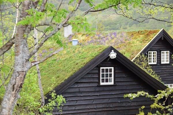 Geirangerfjord Norwegen Norwegisches Haus Grasdach